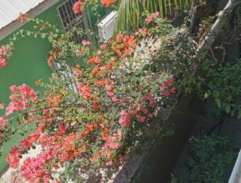 Turtle Bay Villa, Belize Tropical Dream Villas